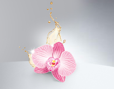 http://www.kampagne.guhl.de/seidenglanz/magazin/guhl-seidenglanz-mit-royal-orchideenoel/